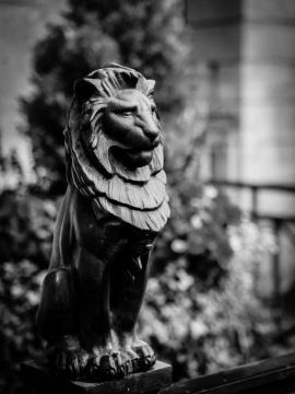 LionBath